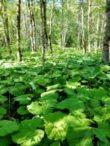 Flora – Biogradska gora