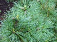 Drveće i žbunje – dendroflora