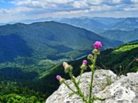 Tura Biogradsko jezero-Bendovac