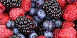 Ljekovite biljke i šumski plodovi